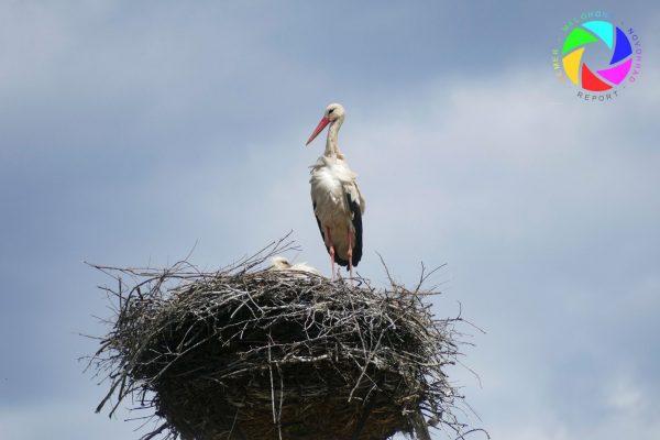 Niektoré hniezda v regióne už osídlili bociany